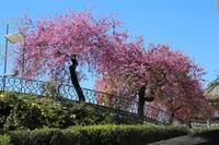 Catania, Stadtpark