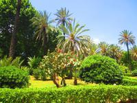 Im Palmengarten von Palermo