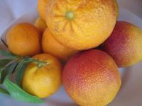 Nachtisch, frisch Orangen und Blutorgangen