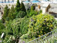 Taormina, Blütenstillleben