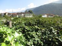 1. Tag Riva del Garda -  Kiwi`s