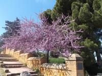 Tempeltal von Agrigent