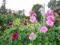 Villa Taranto_Blütenpracht