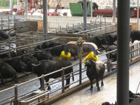 Besuch der Büffelfarm Vannulo