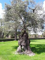 43_Rom_Vatikanische_Gärten
