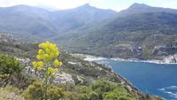 Cap Corse (Strand von Giottani)