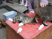 Cagliari. Katz und Maus