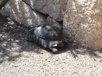 IMG_2044_Schildkröte in Porto Cervo
