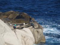 IMG_2135_Angler am Kap Capo Testa