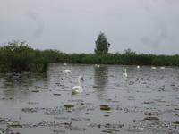 Naturschutzgebiet I Barcaioli del Mincio