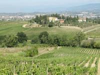 Weinverkostung beim Weinbauern Montaioncino