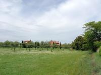 Olivenplantage auf Torcello