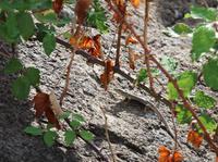 Wanderung auf Lipari - Tiererkundungen