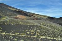 Die Vegetation kehrt zurück auf die Lava von 2002