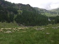 133 Wanderung zu den Saent-Wasserfällen