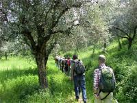 Oliven säumen den Weg am Monte Luppia