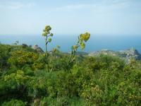 Wanderung zum Monte Epomeo