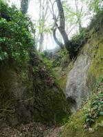 Falanga-Wald