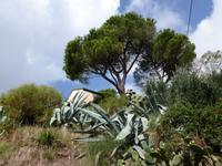 Wanderweg zwischen Bonassola und Levanto