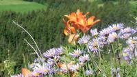 Flora in Südtirol