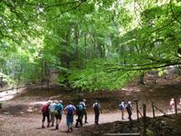 Wanderung im Gargagano-Nationalpark und der Hochwald Foresta Umbra (10)