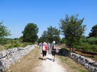 Wanderung im Valle D'Itria Tal durch Radweg Aquädukt Pugliese (1)