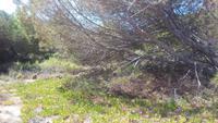 09.05.17 Isola Rossa 26