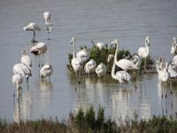 Flamingos im Vendirici