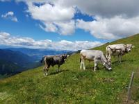 Wandern in Südtirol (Italien) – Dolomiten Wanderreise in Sterzing Astjoch – Sellajoch – Seiser Alm – Gemeinschaftsalm Fane – Burkhardtsklamm – Ratschinger Almenweg – Tatschsp (112)