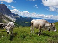 Wandern in Südtirol (Italien) – Dolomiten Wanderreise in Sterzing Astjoch – Sellajoch – Seiser Alm – Gemeinschaftsalm Fane – Burkhardtsklamm – Ratschinger Almenweg – Tatschsp (113)