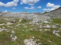 Wandern in Südtirol (Italien) – Dolomiten Wanderreise in Sterzing Astjoch – Sellajoch – Seiser Alm – Gemeinschaftsalm Fane – Burkhardtsklamm – Ratschinger Almenweg – Tatschsp (383)