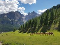 Wandern in Südtirol (Italien) – Dolomiten Wanderreise in Sterzing Astjoch – Sellajoch – Seiser Alm – Gemeinschaftsalm Fane – Burkhardtsklamm – Ratschinger Almenweg – Tatschsp (425)