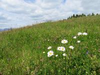 Blumenwelt in Südtirol