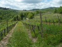 Chianti Weinwanderung