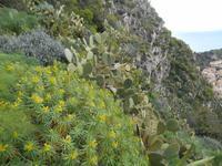 Vegetation in Taormina