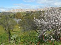 Tal der Tempel in Agrigent (Mandelblüte)