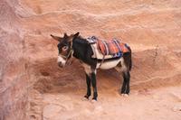 0144 Impressionen aus Petra