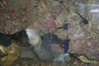 0254 im Aquarium in Aqaba