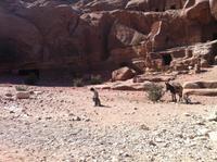in der Felsenstadt Petra