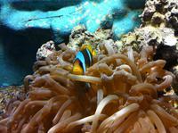 die Tierwelt des Roten Meeres