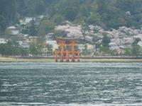 Insel Miyajima - Tori