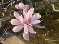 Himeji - japanischer Garten Koko-en