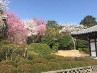 Kyoto - Ryoanji-Tempel