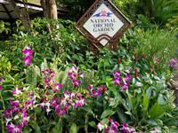 Im Orchideengarten in Singapur
