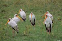 Nakuru Nationalpark - Nimmersatt