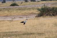 Amboseli Nationalpark - Sekretär