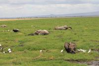Amboseli Nationalpark - Elefanten im Sumpf
