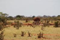 Tsavo Ost Nationalpark - Tiercocktail
