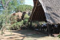 Elefant im Galdessa Camp