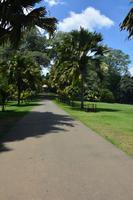 144 Botanischer Garten Peradeniya